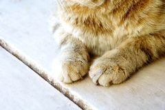 Cute cat`s paws on a wooden white half-tabby cat Royalty Free Stock Photography