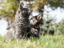 Two nice kittens Royalty Free Stock Images
