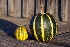Two nice little pumpkin Stock Photography