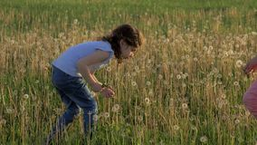 Two nice little sisters collects dandelion flowers in field. Girl Blowing Dandelion Flying seeds particle. blossom time spring sta. Two nice little sisters stock video