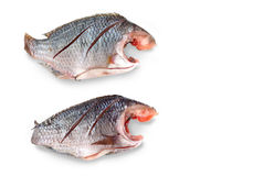 Two Nile Tilapia raw fish isolate and clipping paths Stock Photo
