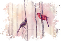 Two Northern Cardinals Watercolor Royalty Free Stock Images