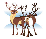 The two northern deer Royalty Free Stock Photos
