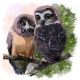 Two Northern Saw-whet owls sit hugging each other on the branches. Two Northern Saw-whet owls. Watercolor painting