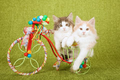 Two Norwegian Forest Cat kittens sitting inside decorated tricycle cart. Norwegian Forest Cat kittens sitting inside very colourful metal tricycle cart decorated royalty free stock photo
