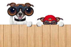 Two nosy dogs stock photography