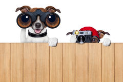 Two nosy dogs Royalty Free Stock Image