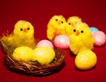 Novelty Easter Toy Chicks and nest. Two novelty Toy easter chicks with eggs in the nest with feathers and pink, blue and yellow eggs Royalty Free Stock Photos