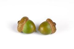 Two oak acorns Stock Photos