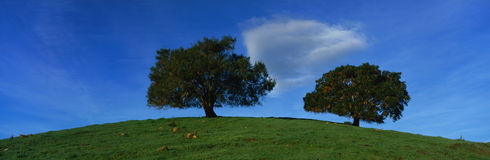 Two oak trees on hill Royalty Free Stock Images
