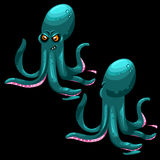 Two octopus on a black background, two sides Royalty Free Stock Image
