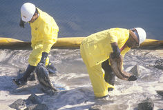 Two oil cleanup workers wade in oily water between a yellow oil barrier and a rocky shoreline clearing up oil with absorbent mater Stock Photography