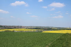 Two oilseed rape fields across farmland. Treeton Royalty Free Stock Photography