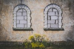 Two old arch windows covered with the bricks, yellow flowers in. Two old arch windows covered with bricks, yellow flowers in the center Stock Photography