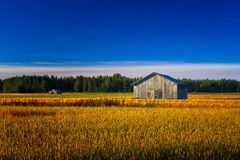 Two Old Barns On An Autumn Field Royalty Free Stock Images