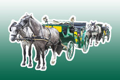 Two old carriages pulled by a couple of horses - image isolated Stock Image