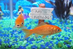 Two old fishes. Royalty Free Stock Image
