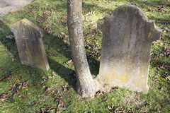 Two old gravestones and trunk of tree on old cemetery in the net Stock Photography