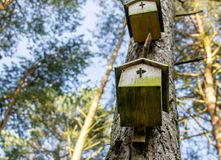 Two old not accepted nesting boxes at the trunk of a pine in the forest. stock photos