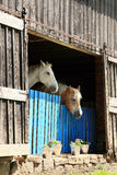 Two old retired horses Stock Photography