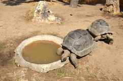 Two old tortoises bask under the sunlight on the sand next to the small pool. Top view royalty free stock photography