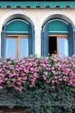 Two old Windows with summer flowers on the cornice in Venice Italy. In the early morning stock photography
