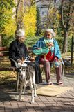 Two old women with their dogs on a bench in a public park in Sofia, Bulgaria on a sunny autumn day royalty free stock image