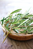 Two olive branches Stock Photo