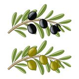 Two olive branches Stock Image