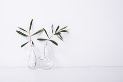 Free Two Olive Branches In Glass Bottles Stock Images - 86329754
