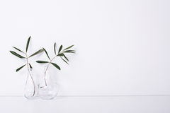 Free Two Olive Branches In Glass Bottles Stock Photo - 86329810
