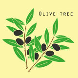 Two olives branches. In bright colors. Nature background Stock Images