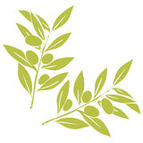 Two olives branches. In monochrom color. Nature background Royalty Free Stock Photos