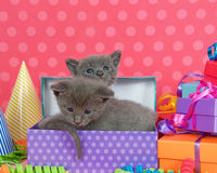 Two one month old kittens in a pile of birthday boxes. Two one month old gray tabby kitten peeking out of birthday present in a pile of brightly colored boxes Royalty Free Stock Photography