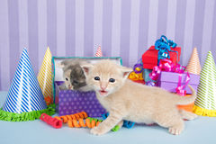 Two one month old kittens in a pile of birthday boxes. Two one month old tabby kittens one in birthday present one walking by piles of brightly colored boxes Stock Photo