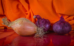 Two onion types on the colorful orange  material background betw Royalty Free Stock Photo