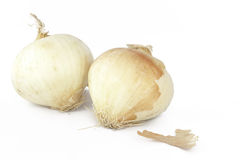 Two onions. Two white cooking onions with skin on Royalty Free Stock Photography