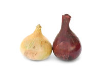 Two onions Royalty Free Stock Photo