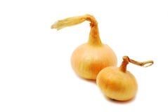 Two onions Royalty Free Stock Photography