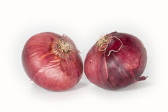 Two onions close-up picture. Two onions photographed on a white background stock photo