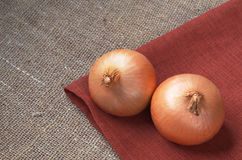 Two onions closeup Stock Photography