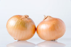 Two onions Stock Photos