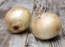 Two onions Stock Image