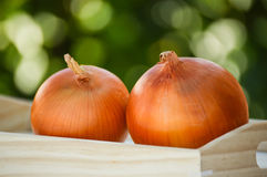 Two onions Stock Photo