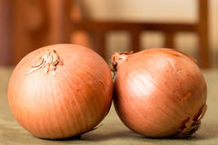Two onions. On a table, plant Stock Photo