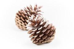 Two open pine cones on a white background. Shallow focus. Two open pine cones sprinkled with a touch of snow on a white background at Christmastime. Shallow royalty free stock images