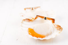Two open raw scallops, on white wood. En backdrop, seafood Stock Images