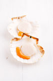 Two open raw scallops, on white wooden backdrop. Seafood Stock Images