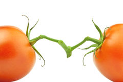 Two opposite tomatoes Stock Photos