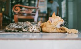 Two Orange and Brown Cats Reclined on Brown Rug royalty free stock photo